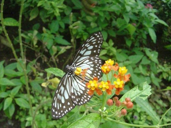 Fond d ecran papillon page 5 for Fond ecran papillon