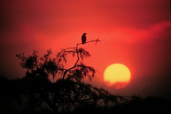 fond d'écran coucher de soleil - Page 4 566ace4b