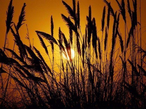 fond d'écran coucher de soleil - Page 3 5f26e5d5