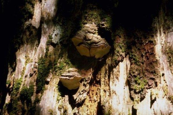 Les champignons  - Page 2 6b66520e