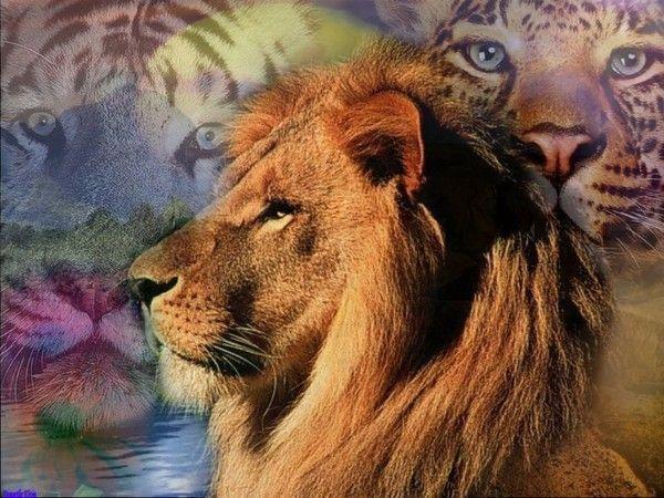 fond d'écran lion A022ac02