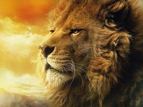 fond d'écran lion - Page 2 Ae10fe99